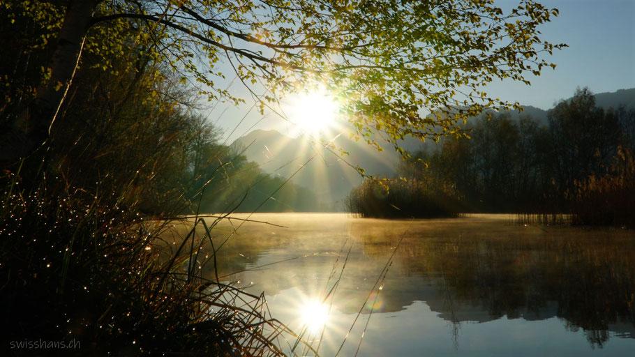 Die Sonne spiegelt sich im nebligen alten Rhein bei Diepoldsau