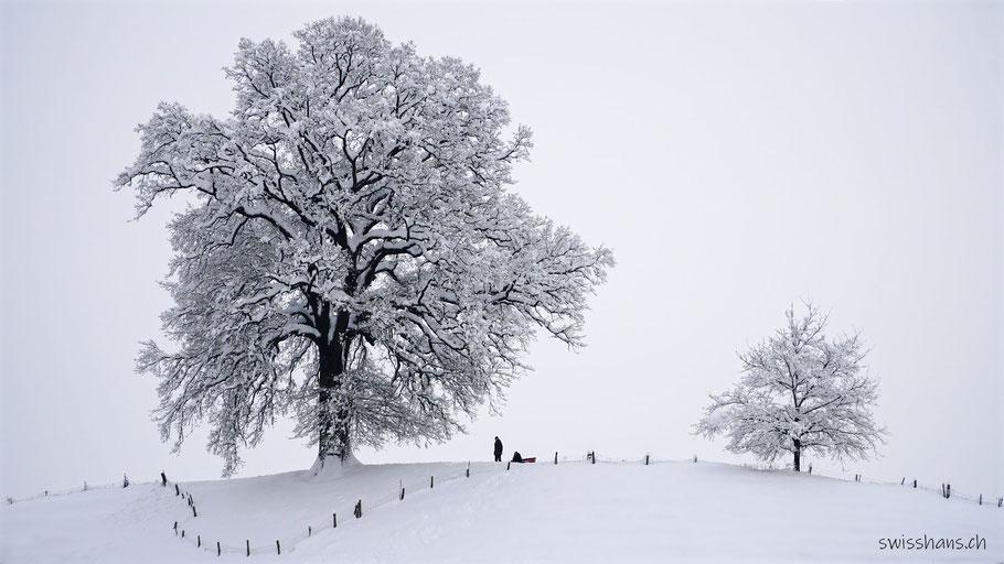 Grosser und kleiner Baum in Altstätten im Winterkleid