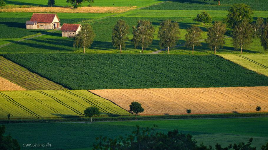 Farbige Ackerfelder mit einer Baumreihe und zwei kleinen Ställen im Morgenlicht