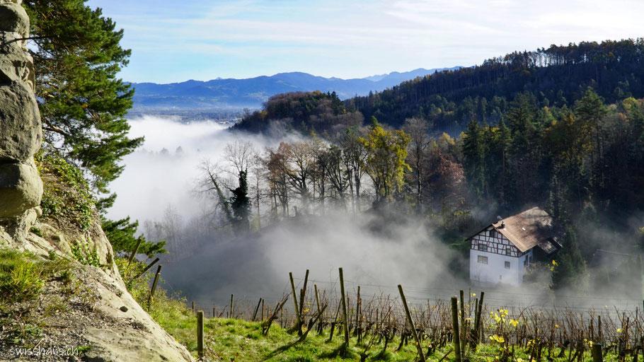 Aussicht von der Ruine Grimmenstein mit Wald, Nebelmeer und Riegelhaus.