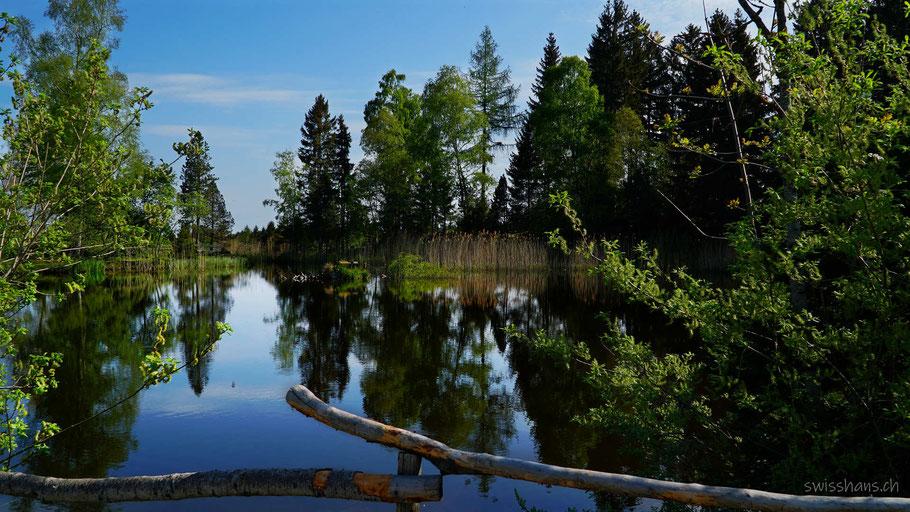 Moorsee mit Bäumen, die sich im Wasser spiegeln und Zaun im Vordergrund
