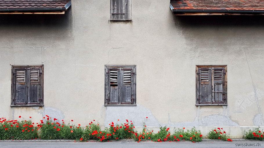 Alte Hausfassade mit alten Fensterläden und Mohnblumen.