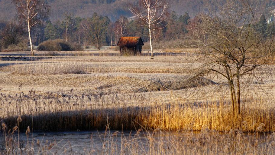 Ruggeller Riet mit Teich, Streuewiesen, Birken und Hütte