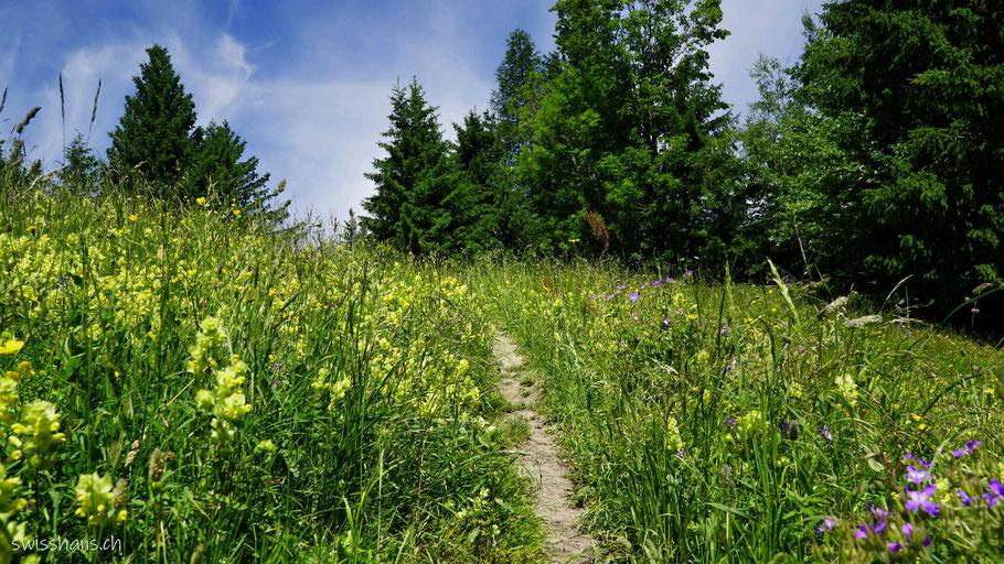 Blumenwiesen und Wald beim Pizalun bei Pfäfers