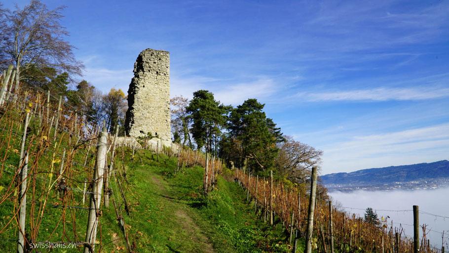 Rebberg mit der Ruine Grimmenstein bei St. Margrethen mit Nebel im Tal.