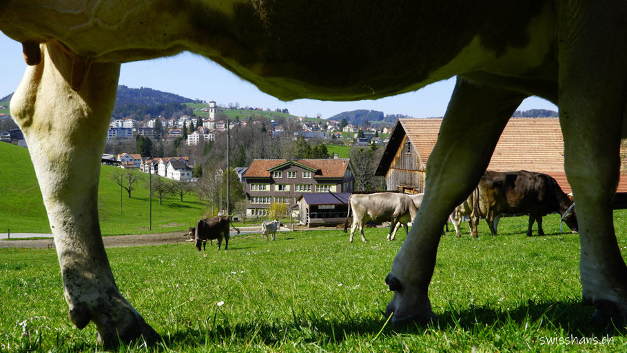 Beine einer Kuh mit dem Dorf Heiden im Hintergrund auf dem Witzweg