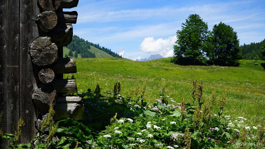 Holzfassade mit Wiese und Wald