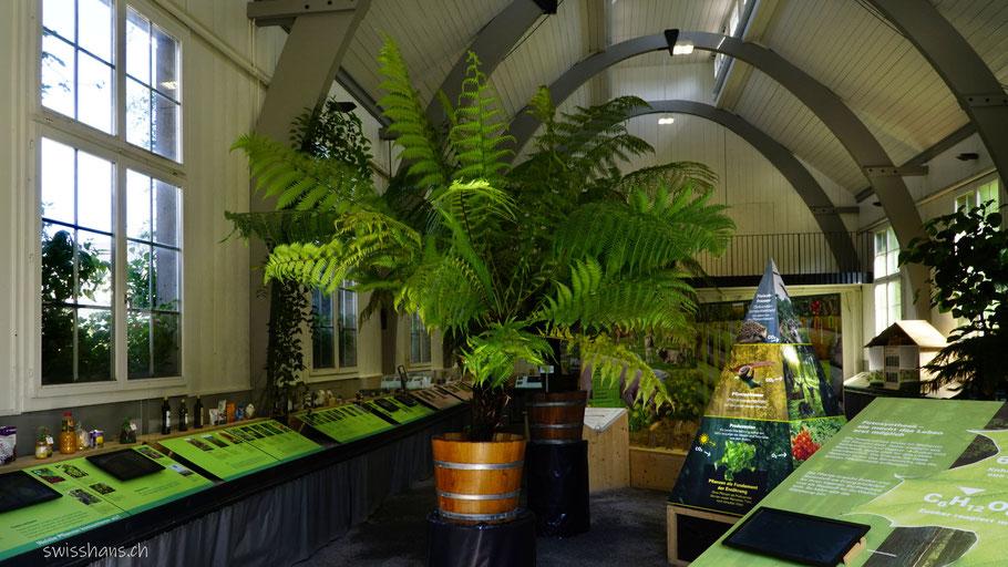 Ausstellungshalle mit der Sonderausstellung im Botanischen Garten St.Gallen