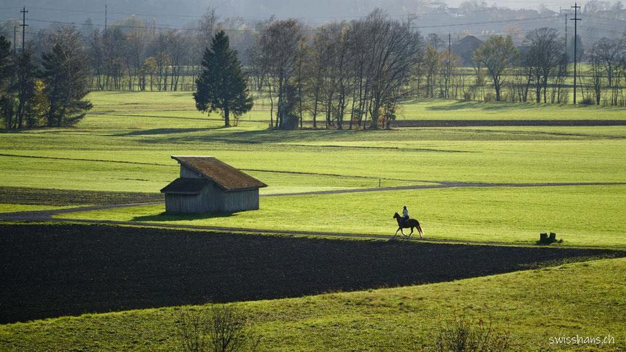 Ein berittenes Pferd und eine Riethütte in der Rietlandschaft von Altstätten