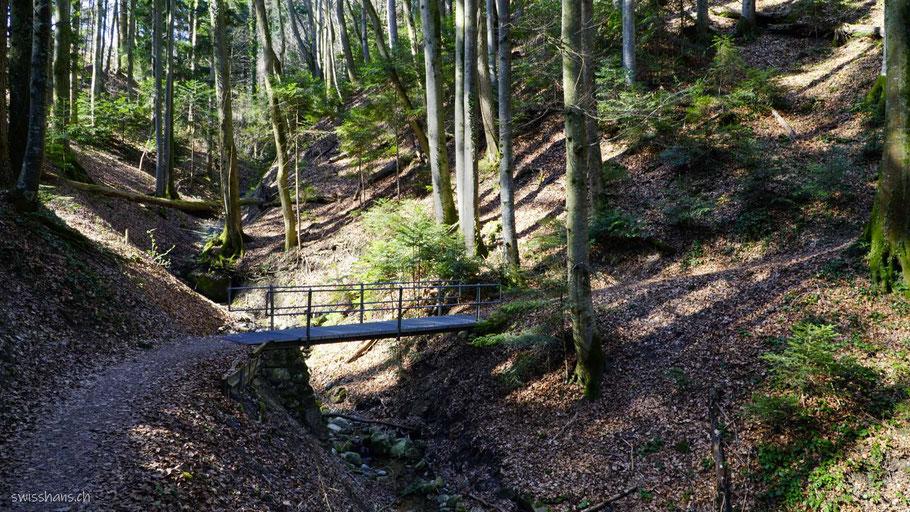 Wald mit Weg und kleiner Brücke am Witzweg