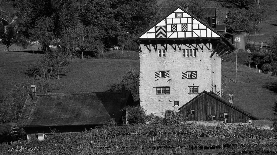 Burg Neu-Altstätten mit Rebberg oberhalb Lüchingen