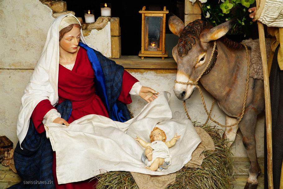 Krippenfiguren Jesus, Maria und Esel in der Kirche St. Jakobus in Widnau
