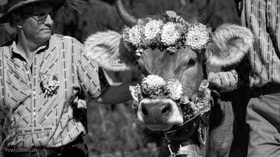 Bauer mit Blumen geschmückter Kuh am Wyden-Alpaufzug in Balgach