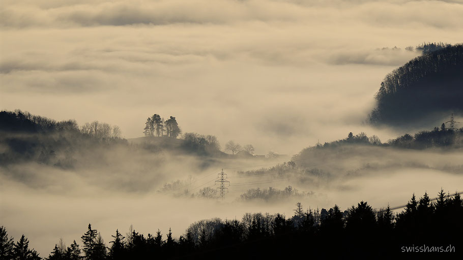 Hügel mit Bäumen im Nebelmeer