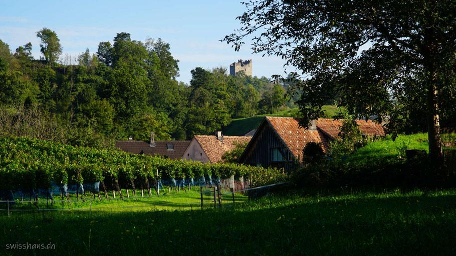 Wiesen und Reben mit schmucken Hausdächern vor der Burgruine Wartau.