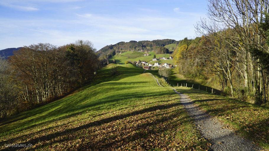 Wiese mit Fusspfad mit bewaldetem Hügel im Herbst
