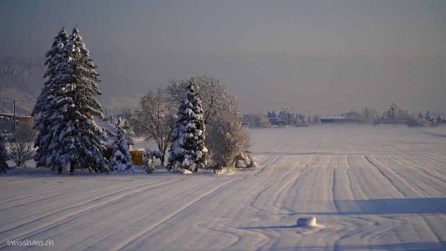 Verschneiter Acker mit Spuren im Schnee und verschneiten Tannen bei Marbach im Rheintal