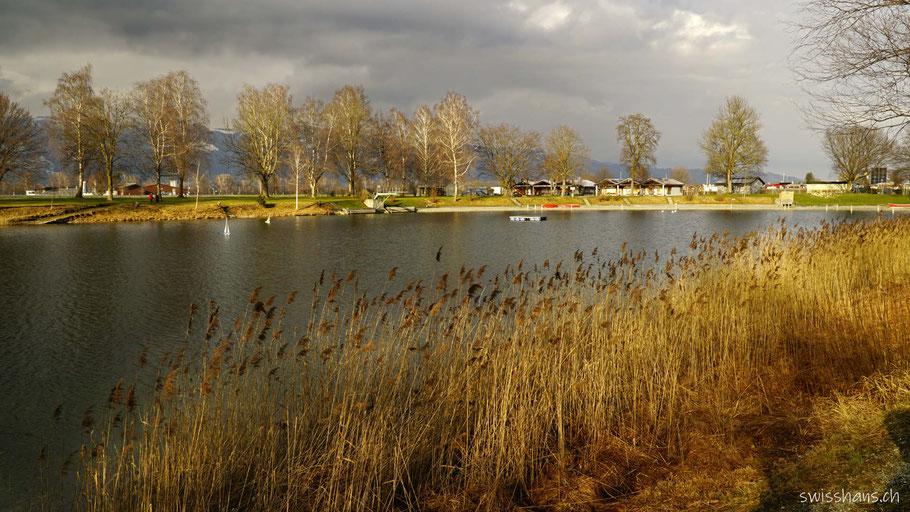 Baggersee Kriessern mit Schilfgürtel und Baumallee