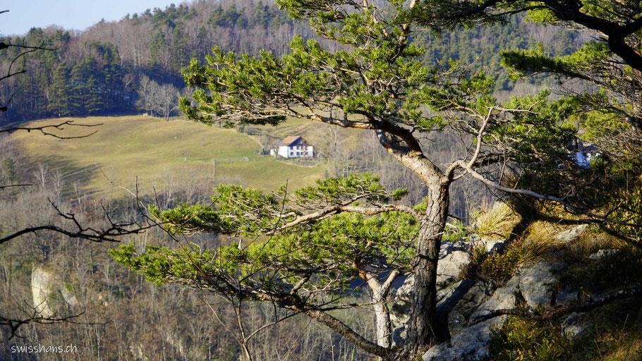 Landschaft beim Älpeli mit Baum und Haus