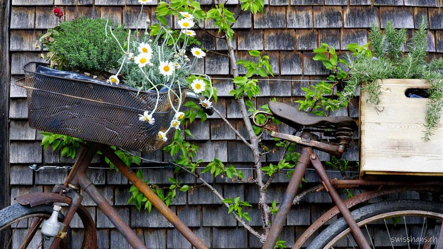 Rostdeko als rostiges Velo mit Velokörbchen und Blumen von Gygax Gartenbau Rebsteoin