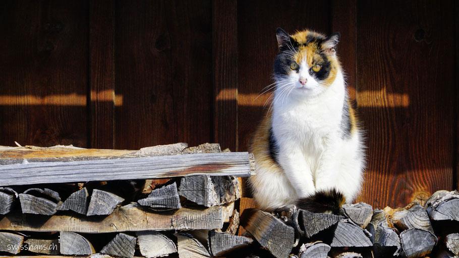 Katze auf einer Scheiterbeige an der Wintersonne