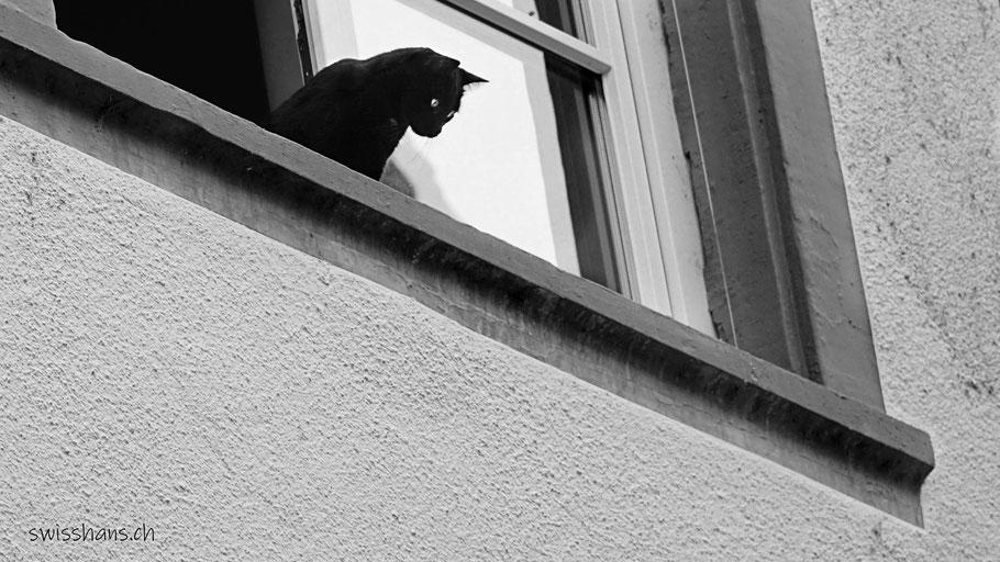 Schwarze Katze auf dem Fenstersims