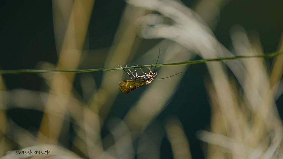 Insekt hängt an einem dünnen Seil