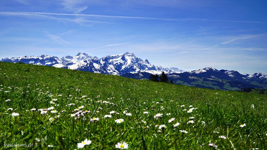 Blumenwiese beim Gäbris mit dem Alpstein und dem Säntis im Hintergrund