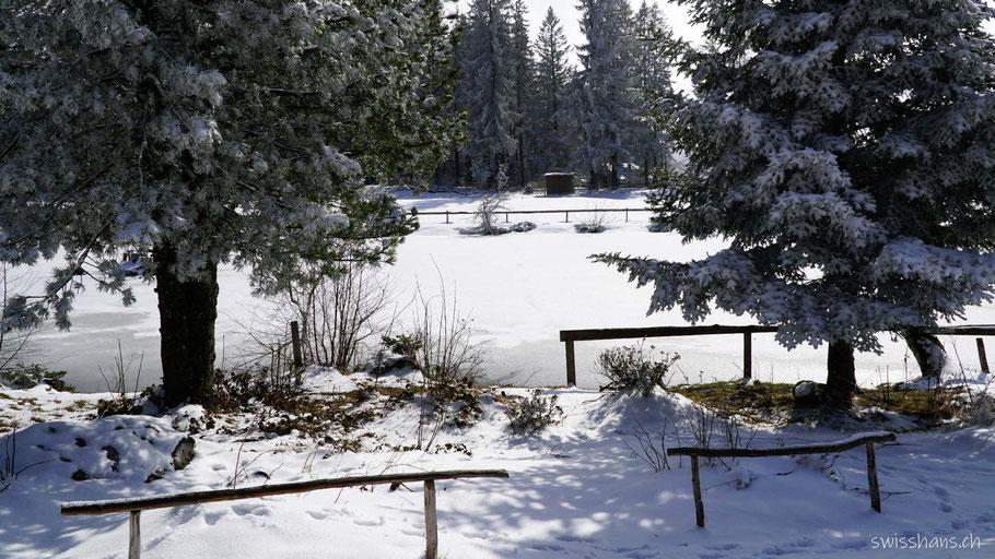 Winterliche Tannen am verschneiten Gäbrsiseeli bei Gais