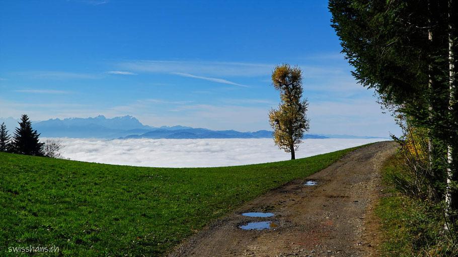 Weg und Wiese mit einem Baum vor dem Nebelmeer und dem Säntis.