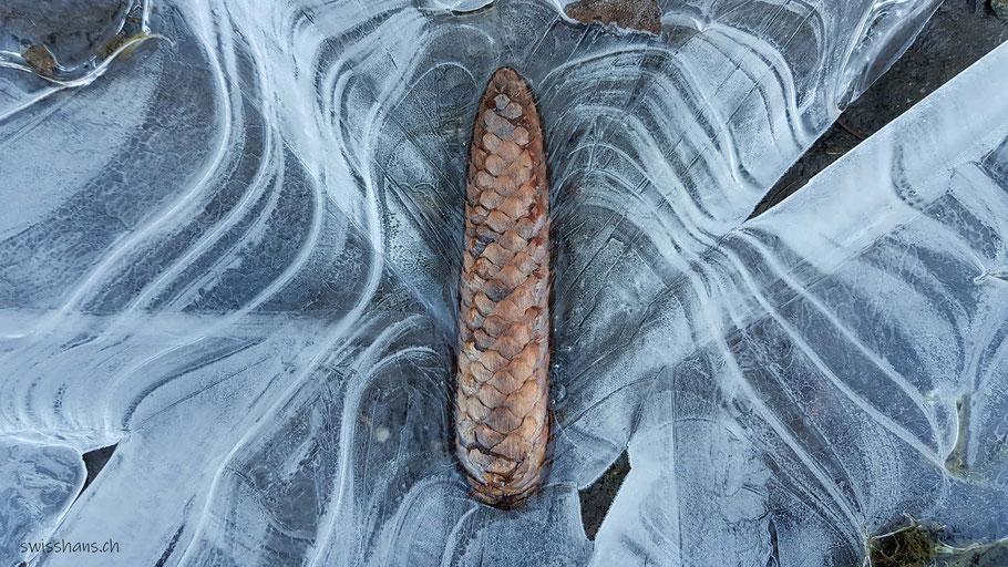 Tannzapfen in weisser, strukturierter Eisschicht in einer Pfütze auf dem Waldweg.