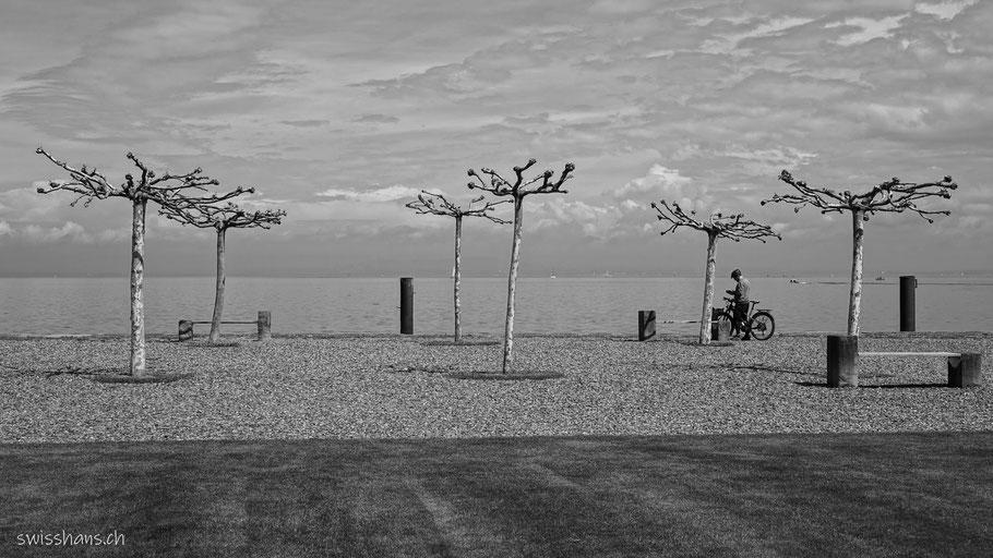Bäume und Radfahrer auf der Hafenmole von Staad am Bodensee