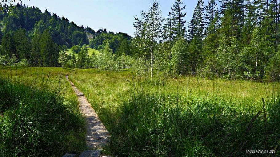 Moorlandschaft bei der Lustenauer Hütte