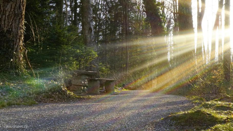 Sonnenstrahlen im Giessenpark Wald bei Bad Ragaz