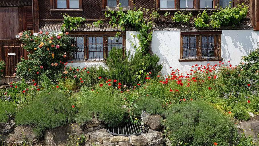 Schmucke Hausfassade mit Rosen, Reben und Mohn und einem Brunnenschacht