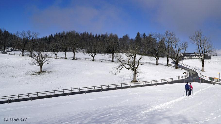 Winterlandschaft mit Baumallee und zwei Wanderinnen beim Schwäbrig Richtung Gäbris