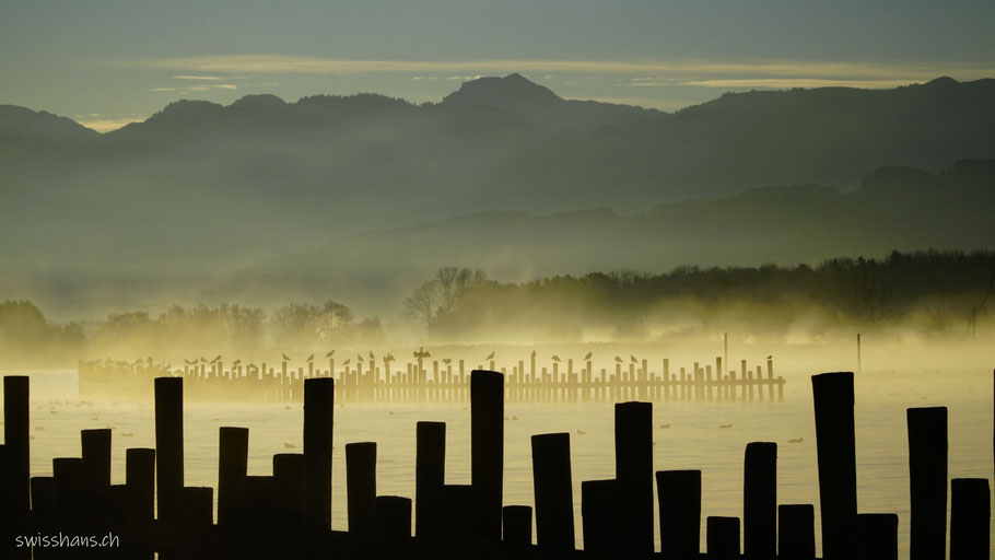 Bodensee mit Morgennebel und Wellenbrechern sowie Kormorane und Möven