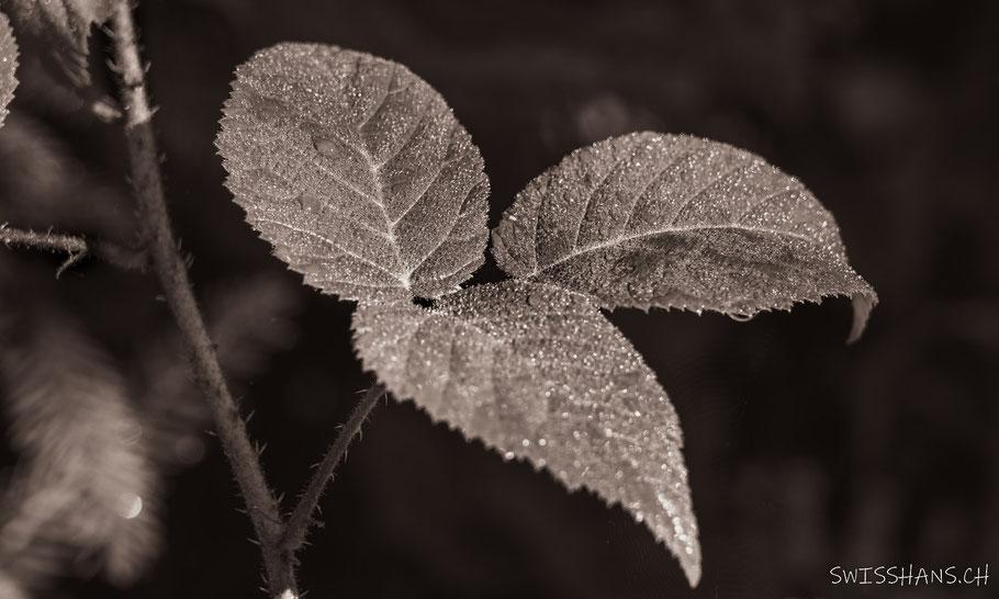 Grünes Blatt mit Wassertropfen liegt auf der Strasse