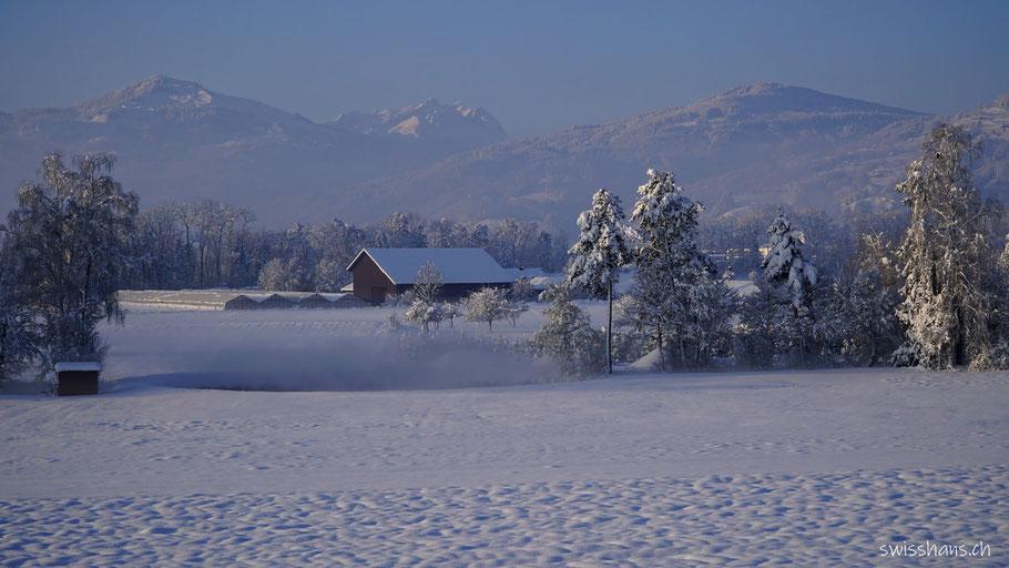Winterlandschaft mit Rheintal und Säntis