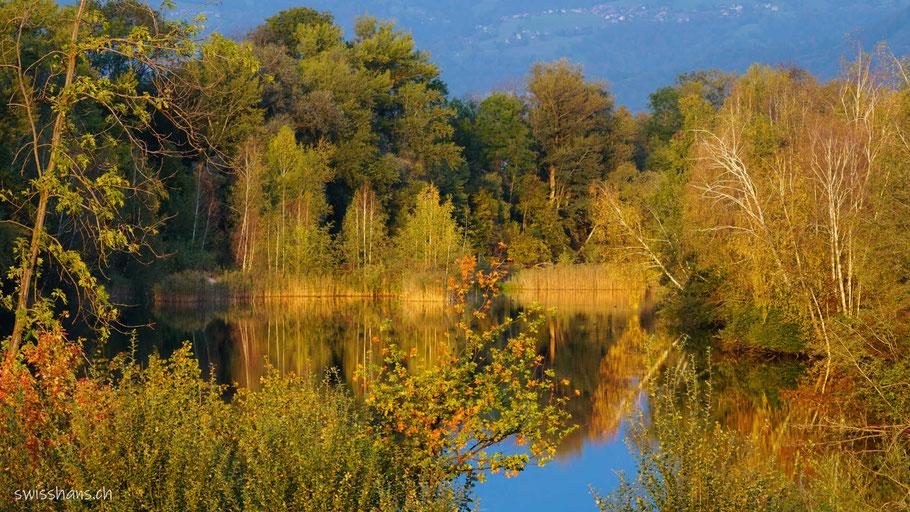 Spiegelung auf der Wasseroberfläche mit goldgelb gefärbten Büschen in der Abendstimmung