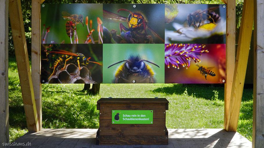 Schaubienenkasten beim Bienenlehrpfad in Vaduz