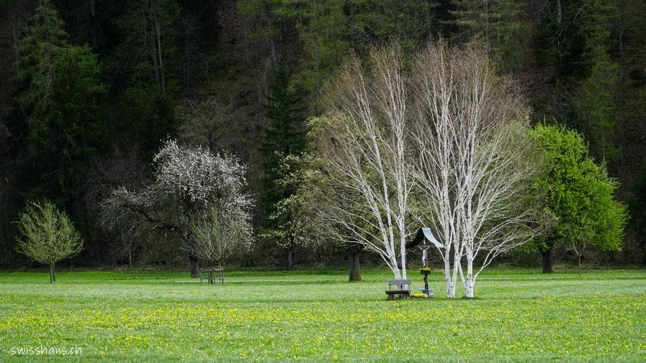 Wegkreuz mit Birken auf blühender Wiese bei Balzers
