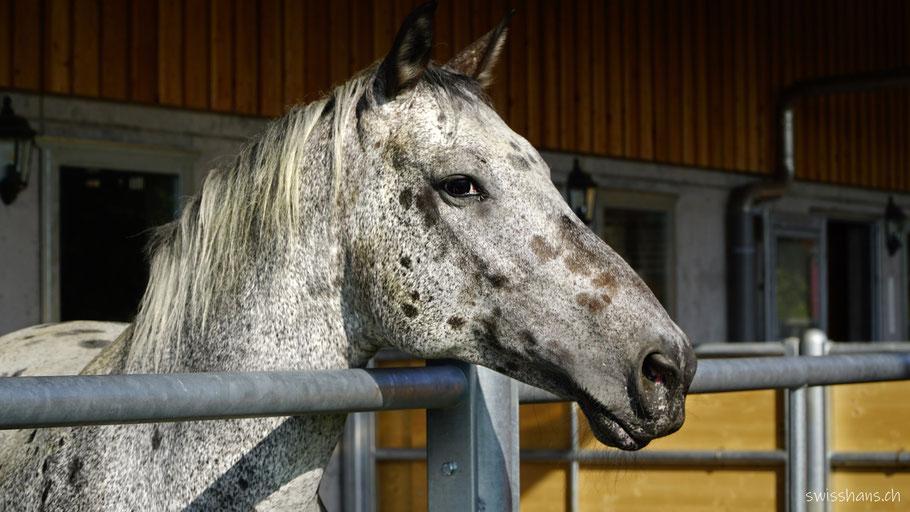 Pferd beim Café Mäser im Feld Marbach