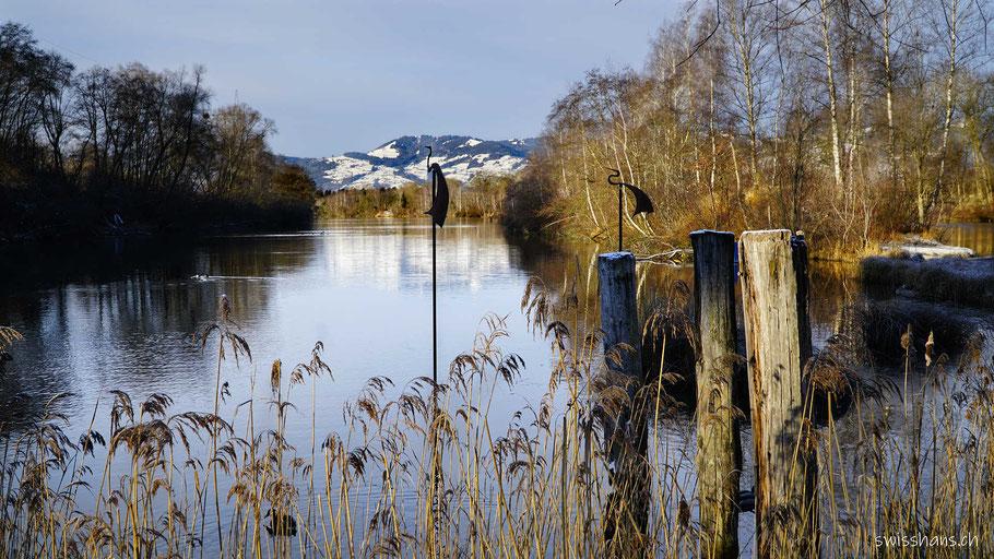Der alte Rhein mit Schilf, Birkenwald, Schneeberge und Kunstwerke