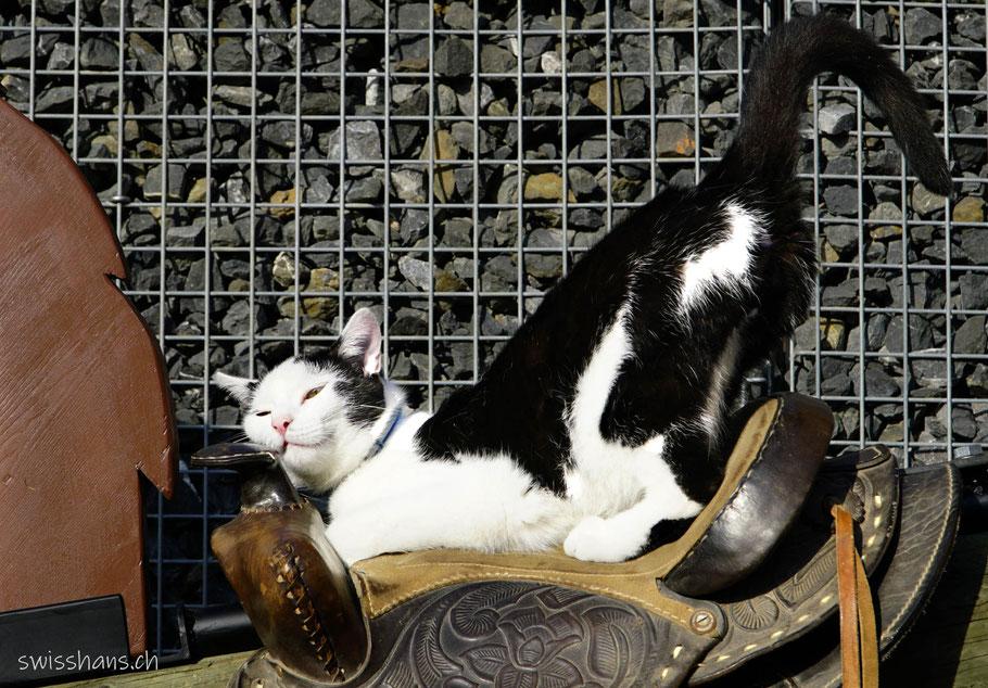 Glückliche Katze auf einem Pferdesattel beim Café Mäser im Feld Marbach