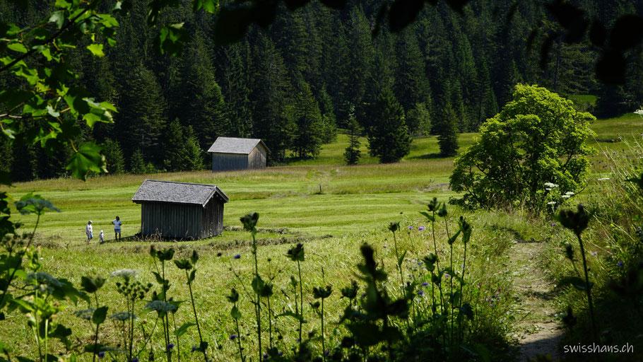 Almwiesen bei der Lustenauer Hütte.