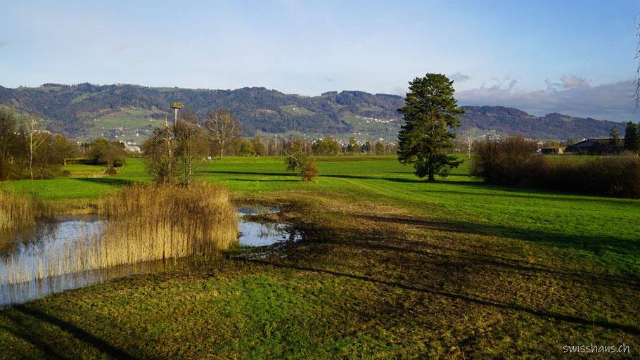 Rietlandschaft bei Altstätten mit Teich und Schilf