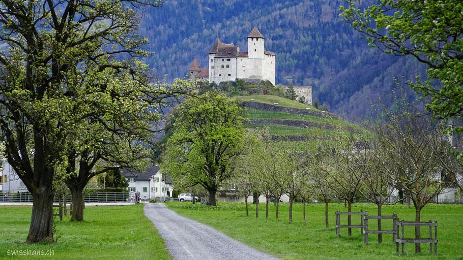 Burg Gutenberg Balzers mit Baumallee und Weg