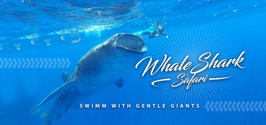 Whale Shark Private Tour: Playa del Carmen, Akumal, Tulum, Puerto Morelos, Cancun, Isla Mujeres.
