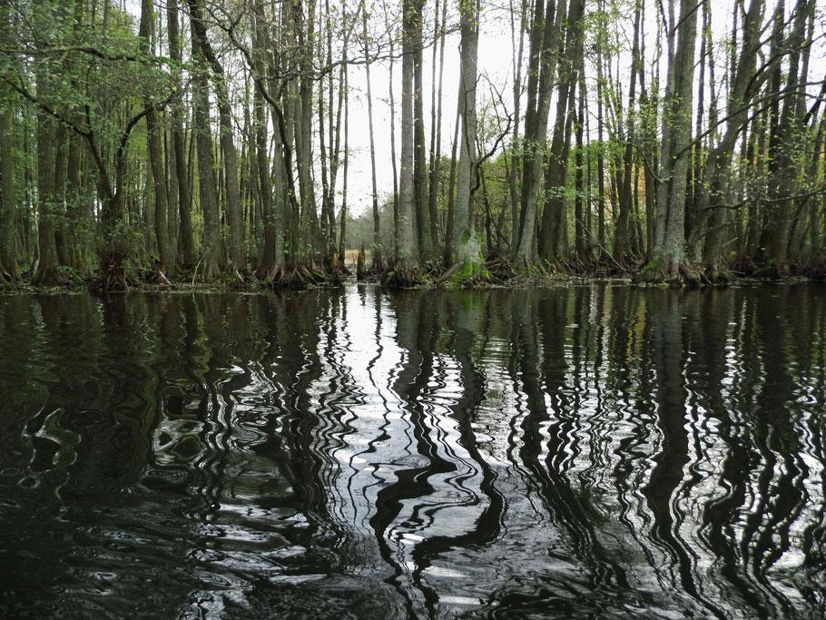 Ufer des Nadarzyce-Stausees